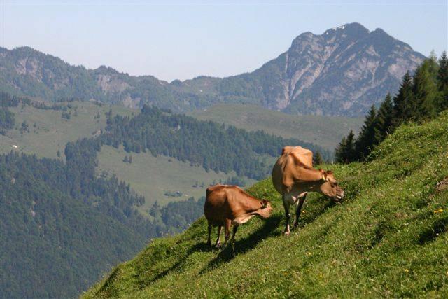 tour du monde jersiais – jersiaises en suisse