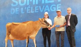 FAUVETTE (Lirsk x Q Lanius) à nouveau Grande Championne au Sommet de l'Élevage !